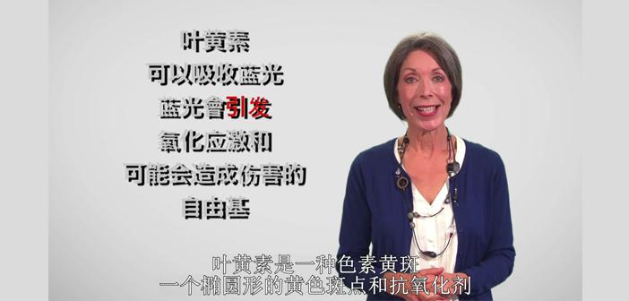 subtitles for video or film translation